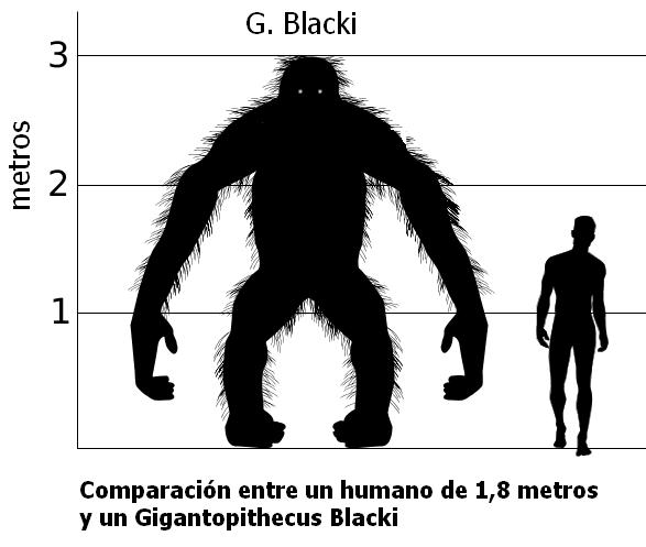 Gigantopithecus_vs_Hombre